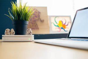 Комнатное растение на рабочем столе